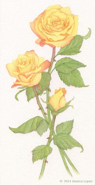 Yellow Roses | Jessica Lopez